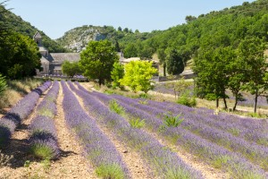 http://www.dreamstime.com/stock-photos-beautiful-landscape-provence-france-abbaye-de-senanque-near-village-gordes-vaucluse-region-image40478843